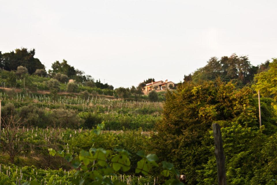 Monte-Brecale-Cantina