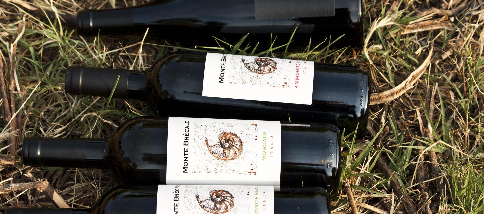 i vini di Montebrecale