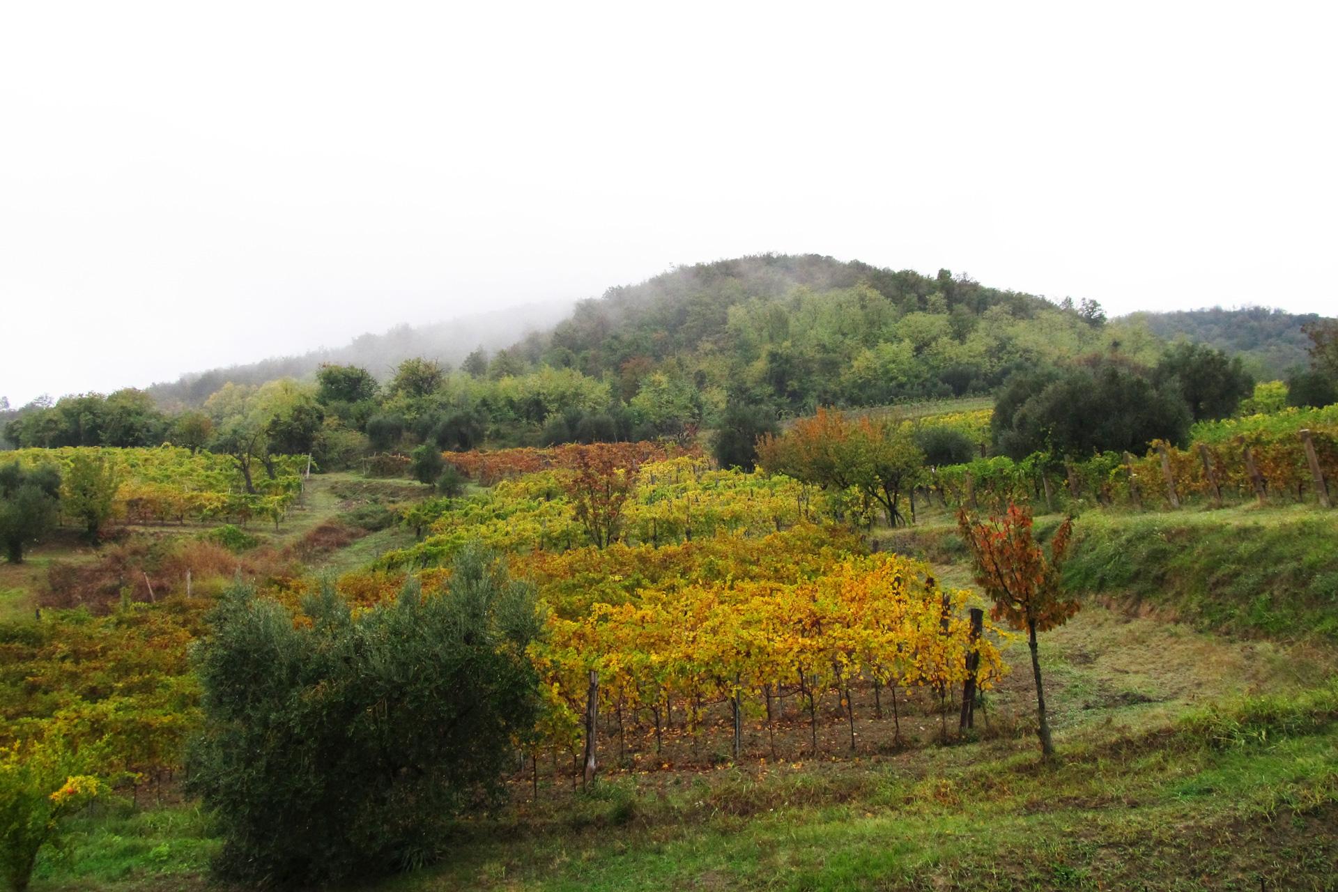 paesaggio_montebrecale